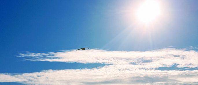 seagull, self love zone